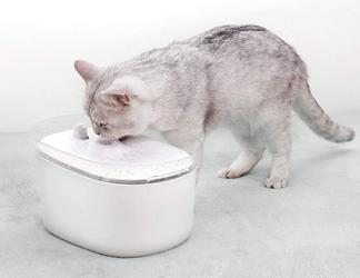 Avis Distributeur d'eau automatique pour chat HoneyGuardian